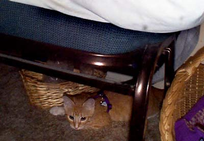 Biscuit_hiding