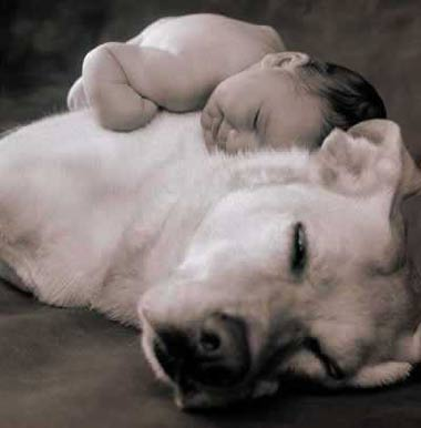 Dog_and_baby2